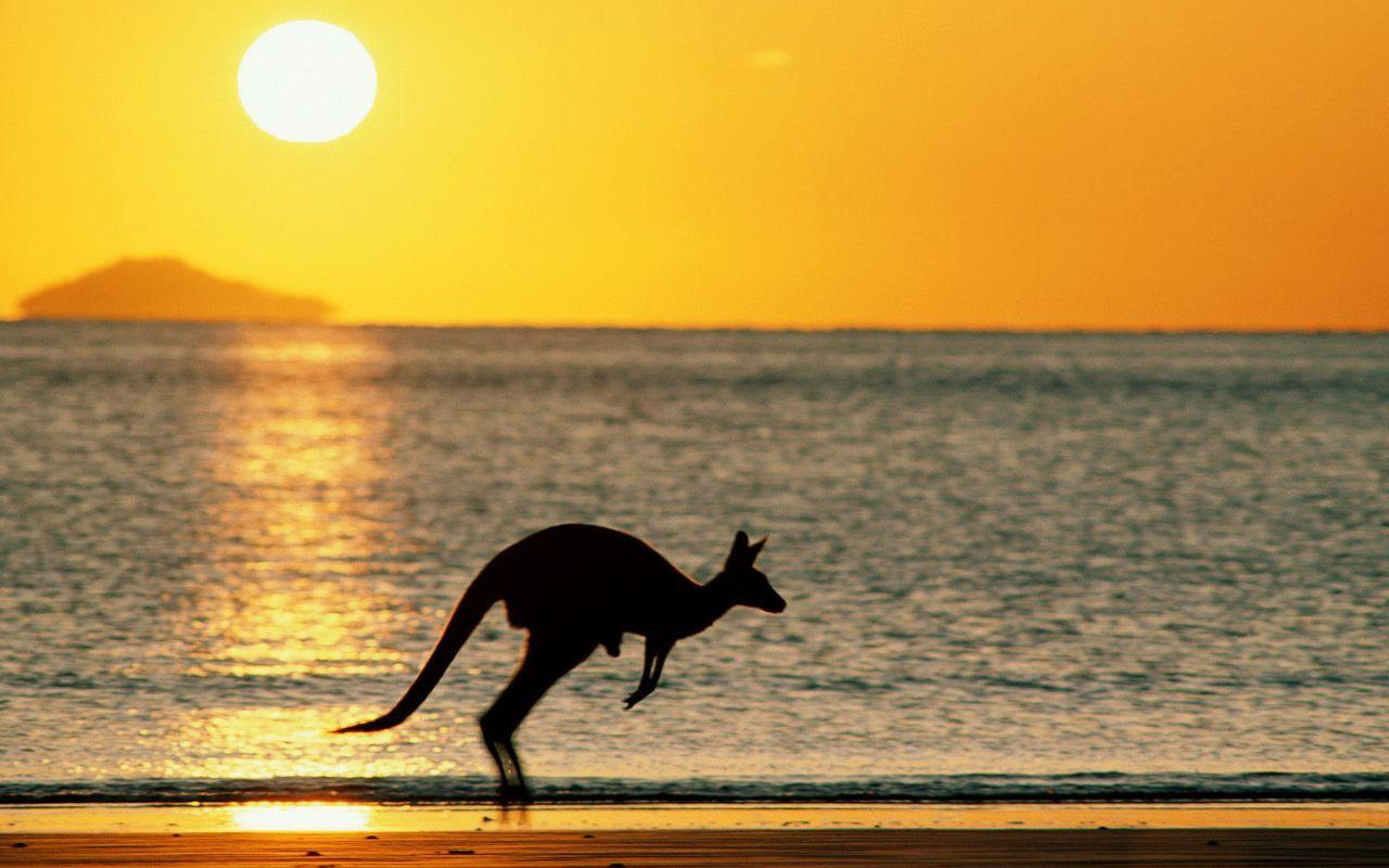 http://2.bp.blogspot.com/-jLz8fDmyG_A/TVu_YZm6uyI/AAAAAAAAIRY/IbocDL81R1I/s1600/kangaroos+pictures.jpg