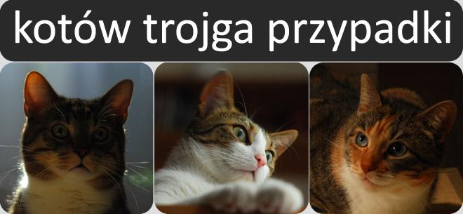 Kotów Trojga Przypadki