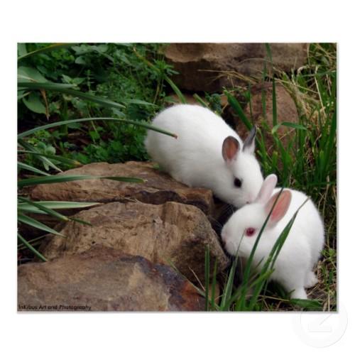 rabbit,bunny,animalia,chordata,vertebrata,,mammalia,lagomorpha,pet animal