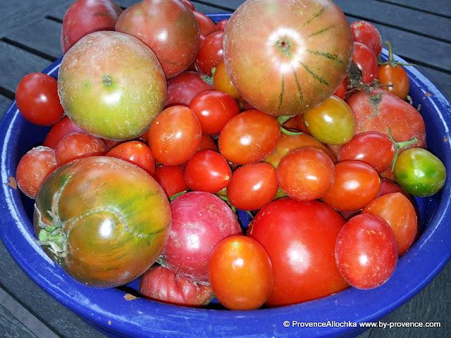 томаты в октябре