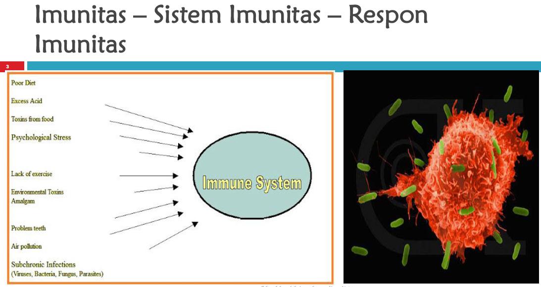 Imunitas – Sistem Imunitas – Respon Imunitas