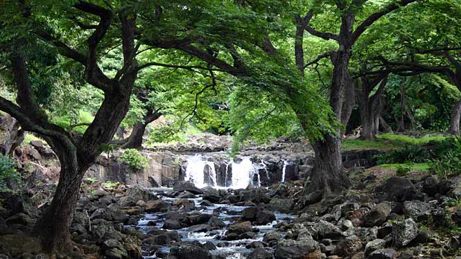 Oahu planning for Foster botanical garden honolulu