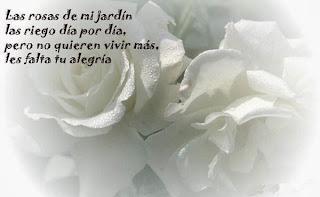 Frases De Amor: Las Rosas De Mi Jardín Las Riego Día Por Día