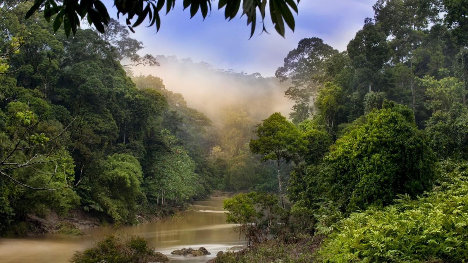 Achtergrond met de natuur in maleisië . een rivier in het bos