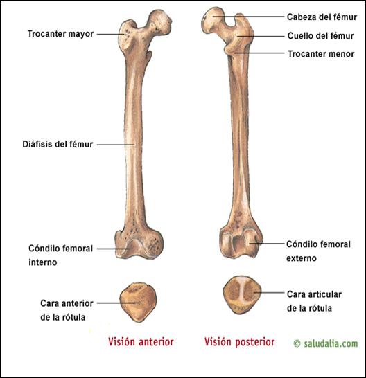 SEMIOLOGÍA OSTEOARTICULAR: ARTICULACIÓN DE RODILLA