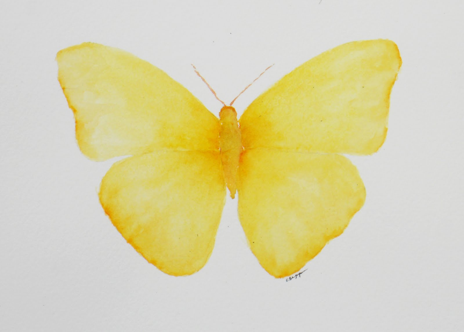 butterfly on yellow color - photo #32