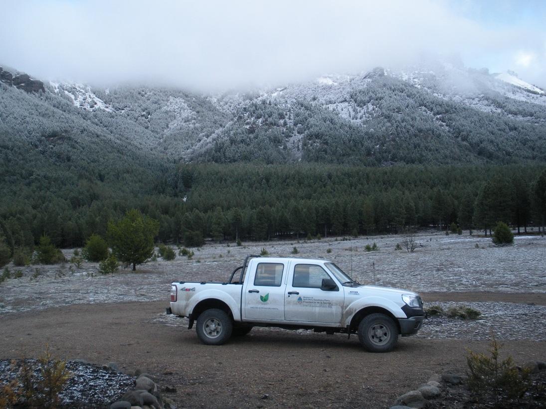 Patagonia andina forestal capacitaciones sobre sanidad for Viveros en neuquen