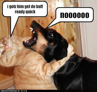 Funny pictures of cats and dogs 1