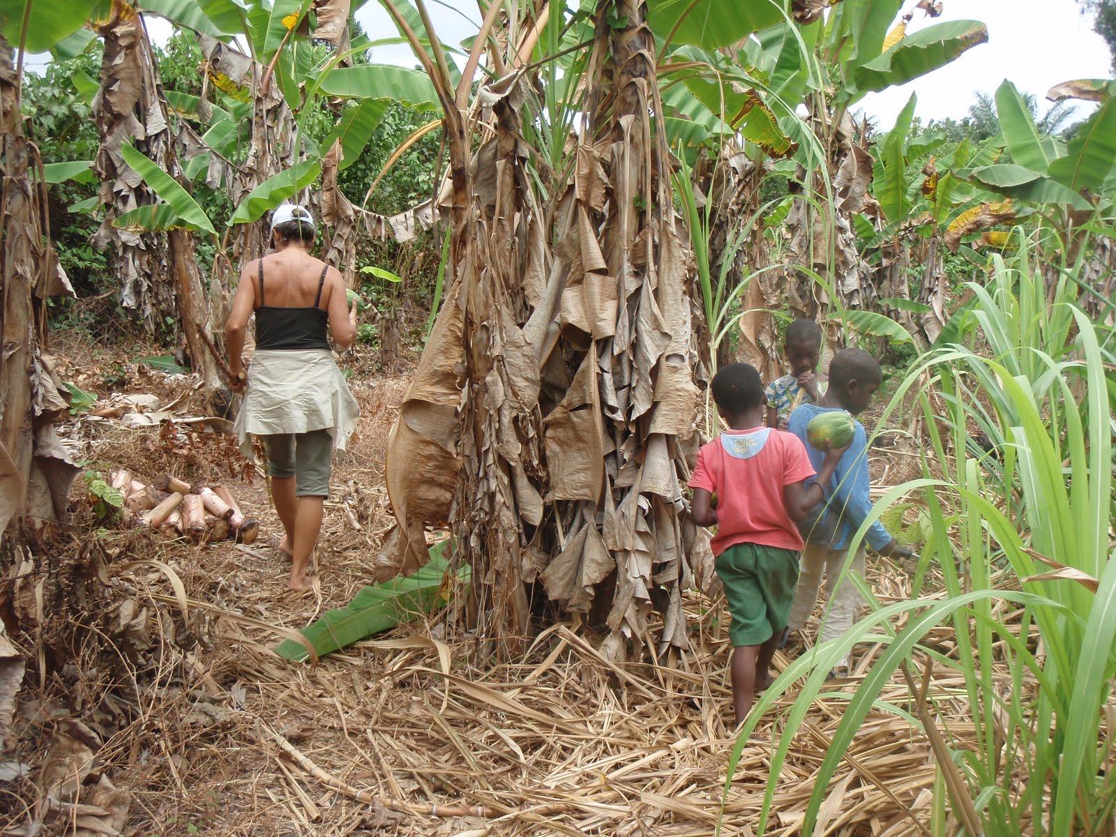 Visite des plantations