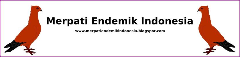 Katalog Jenis Merpati Lokal Asli Indonesia