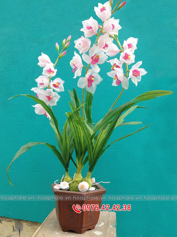 Hoa địa lan trắng hồng - hoa pha lê
