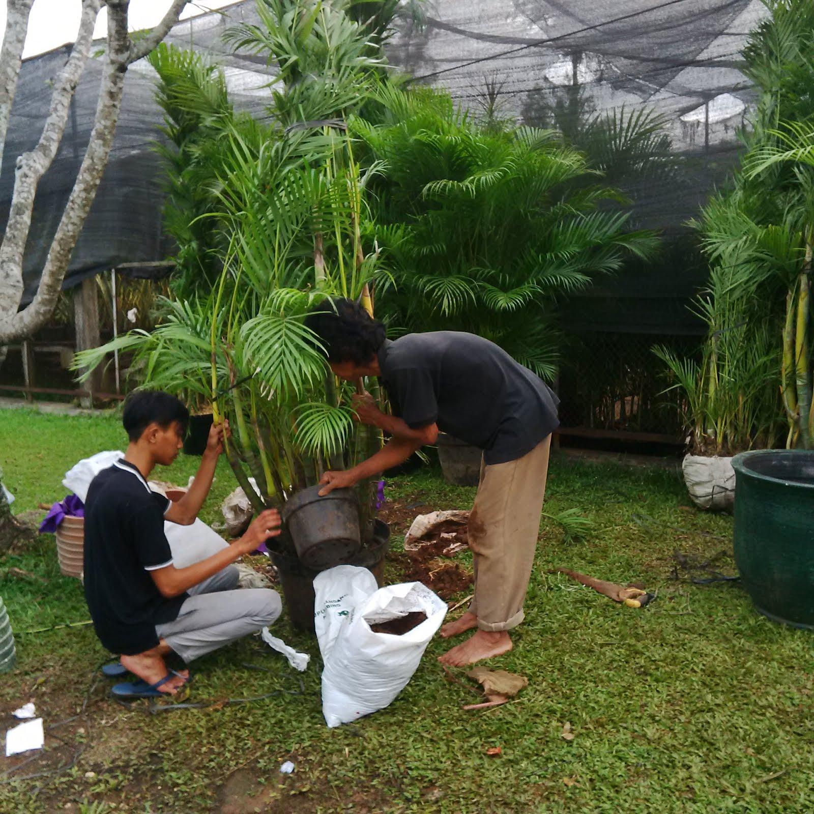 Rental Tanaman - Prepare