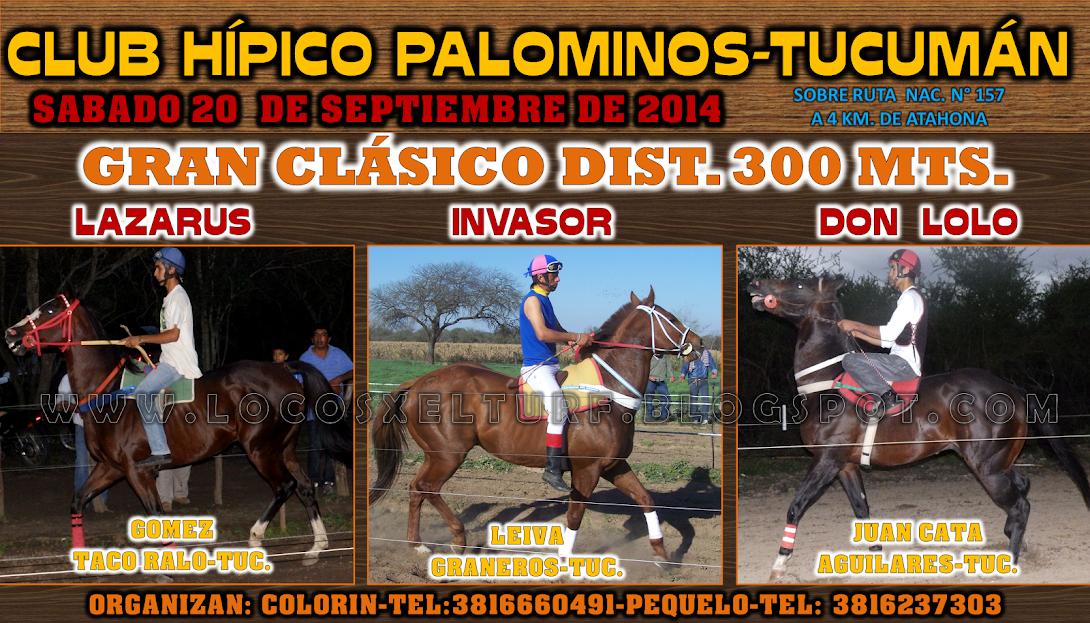 20-9-14-CLAS-1-HIP. PALOMINOS