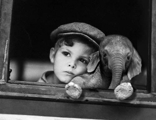 One Pic Boy With Baby Elephant