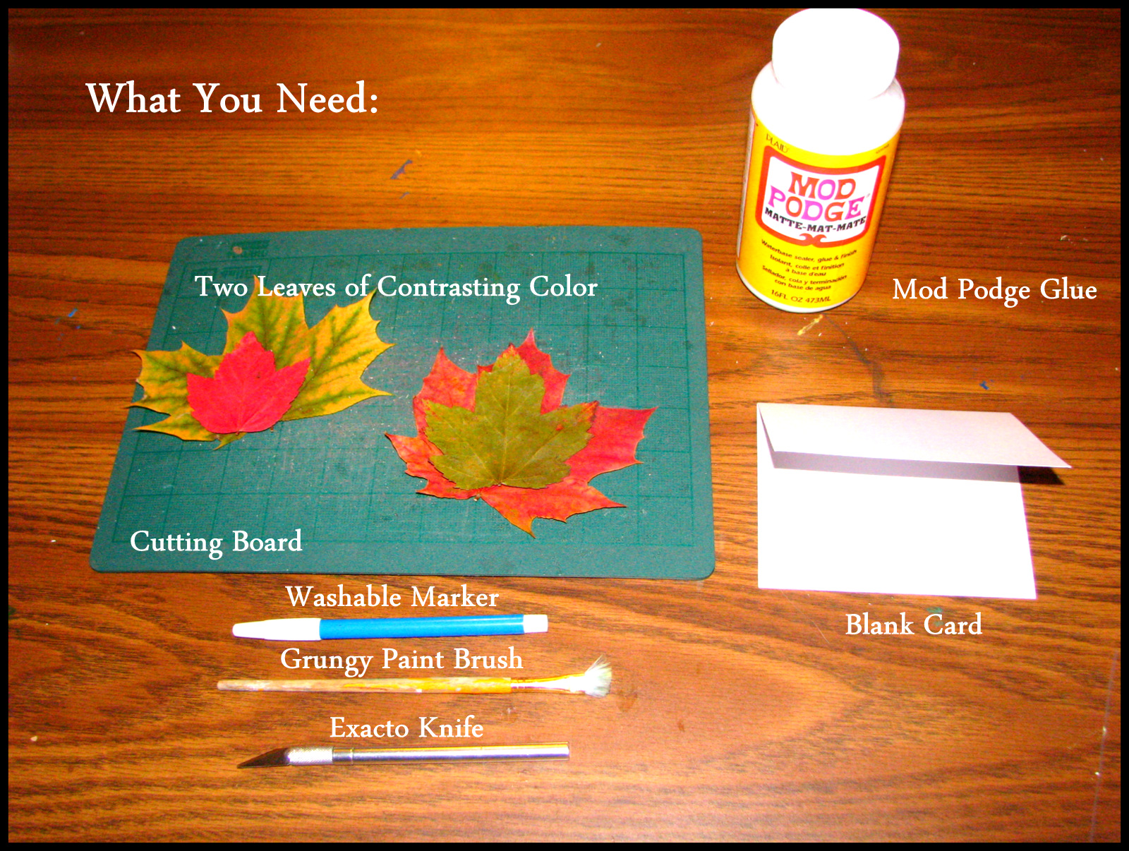 How to make leaf greeting cards fauna finds flora tis the season to send out greetings here is a simple way to make a decorative greeting card using natures decorations autumn leaves kristyandbryce Image collections