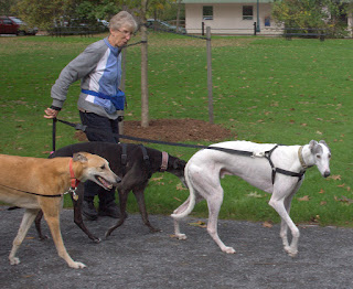 Auntie Carol, Bettina and Blue greyhound gallivanting