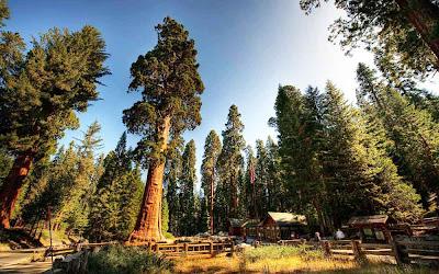Sequoia National Park – Califórnia