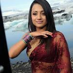 Trisha in Transparent Saree Photo Gallery