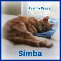 BE WELL SWEET SIMBA