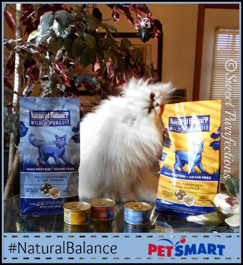 Brulee biting into the #NaturalBalance Wild Pursuit bag