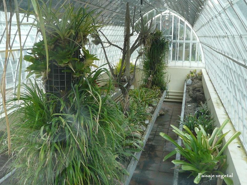 Tipos de plantas jardin botanico v rias - Tipos de jardineras ...