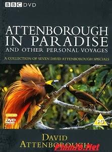 Điều Huyền Bí Của Chim Thiên Đường - Attenborough&#39s Paradise Birds