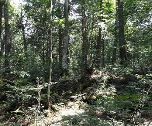 Bosque de los suicidas