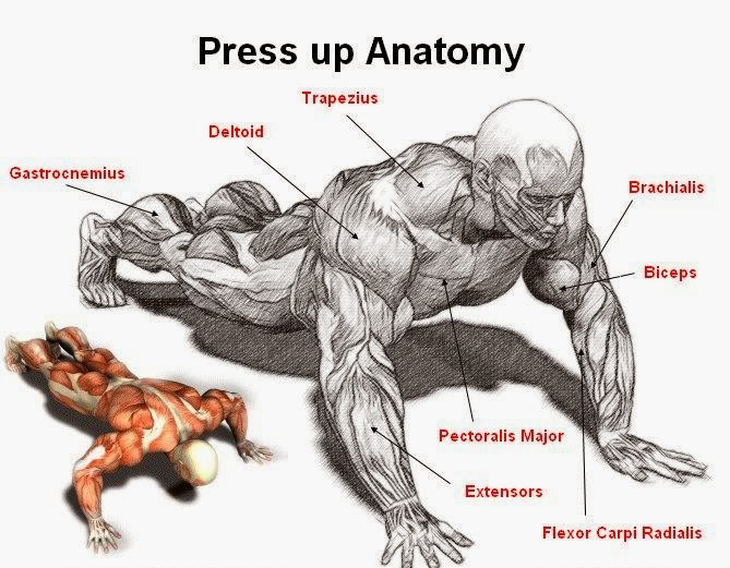 Body And Fitness Tips Pressup Chest Training