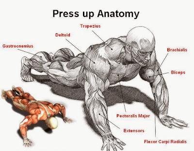 Pressup Chest Training