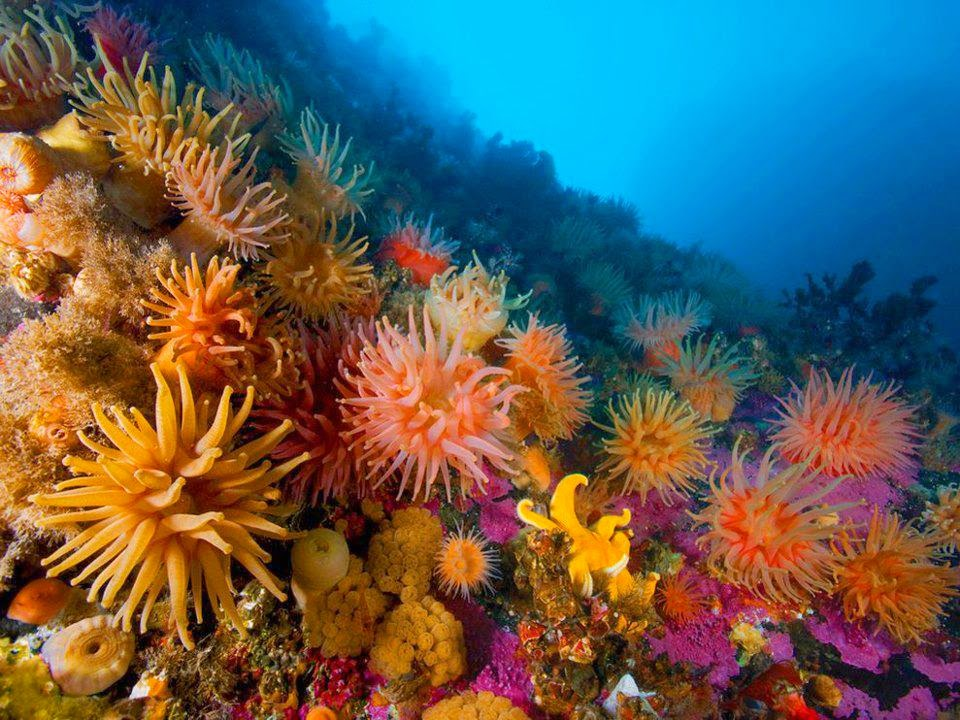 Descubre TU MUNDO: Flash naturaleza: anémona de mar -mitad planta y ...