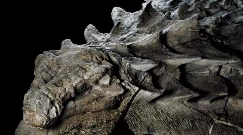 Βρέθηκε «ζωντανό» απολίθωμα δεινοσαύρου στον Καναδά