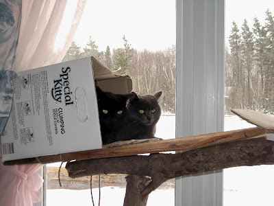black and grey barn cats in cat tree box