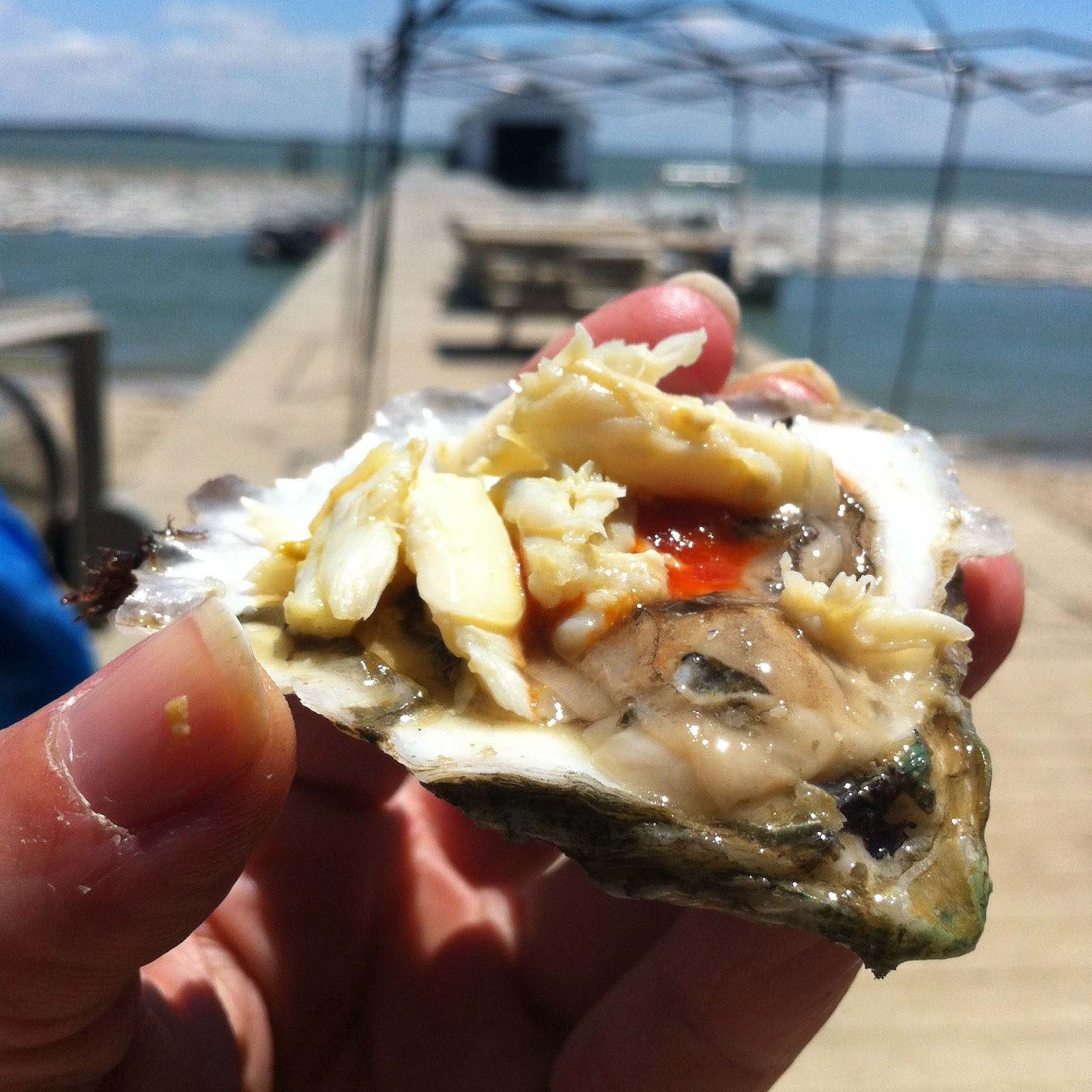 florida girl in dc Visiting Choptank Sweets Oyster Farm & Eating Oysters