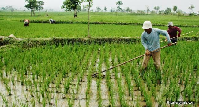 Informasi Mengenai Pertanian Indonesia