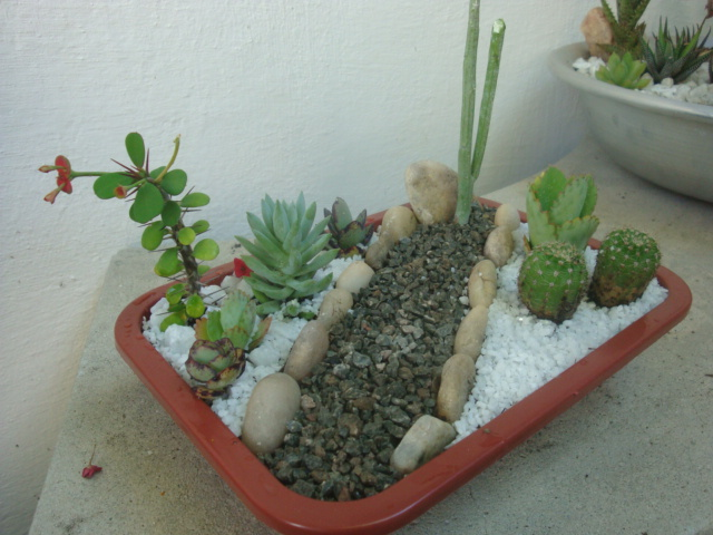 mini jardim suculentas:Meu Jardim é Assim: Mini-jardins de cactos e suculentas, fiz mais