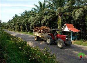 pengangkutan-tbs-kelapa-sawit.jpg