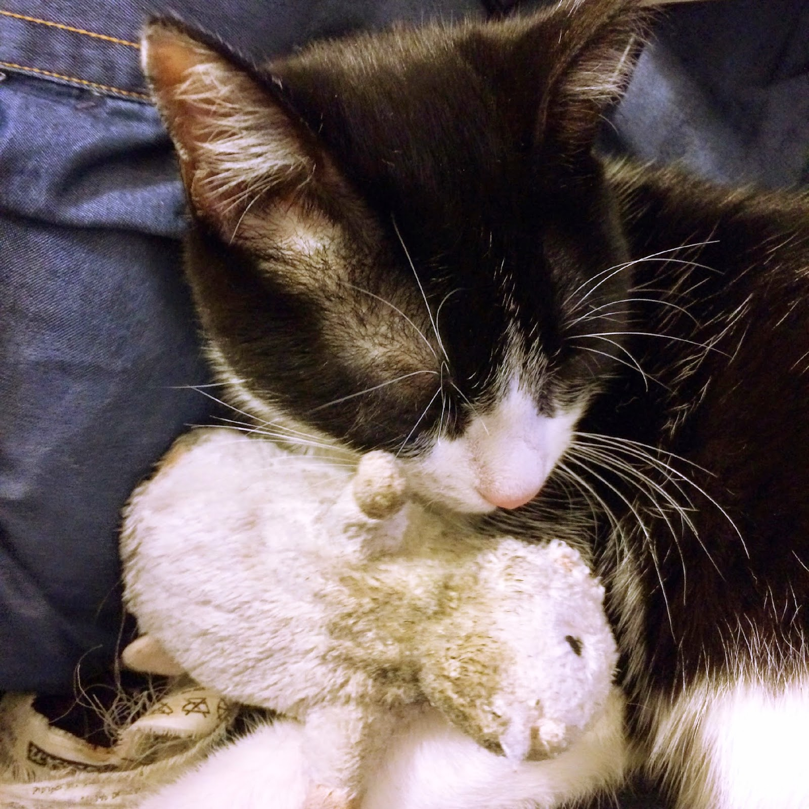 calin chat et son doudou
