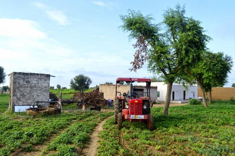 adsar karshi farm