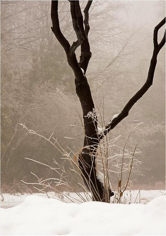 Compact Camera, Photo of the Day in Emphoka by Alan Norsworthy, Nikon P7100, http://flic.kr/p/iuSUtN