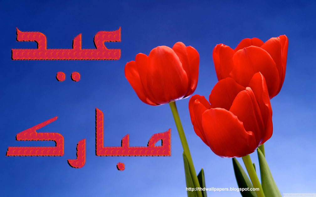 Red rose eid mubarak greetings cards flowers urdu text hd wallpapers red rose eid mubarak greetings cards flowers urdu text m4hsunfo