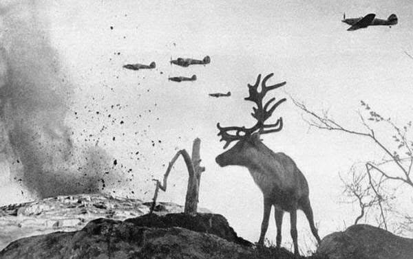 Rarest Historical Photos, That you can Never Forget. - In this Picture, a reindeer watches, while a war planes drop bombs on Russia in the year 1941.