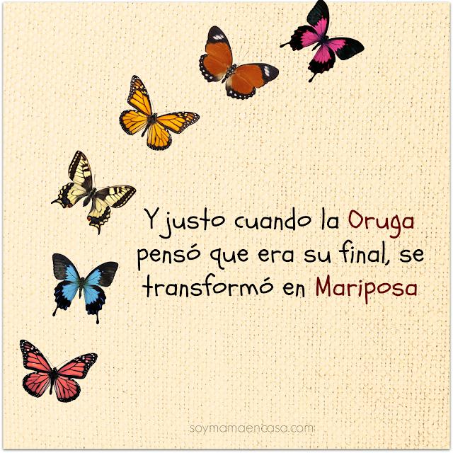 frases positivas lindas mariposas