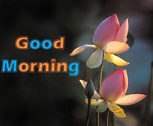 30+ Best Good Morning Images for Whatsapp, Facebook