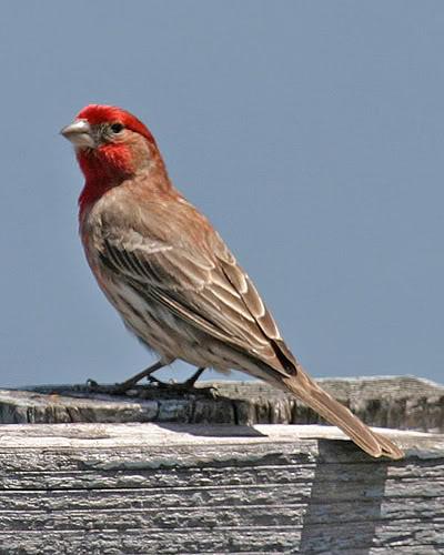 Lista de Especies - Birding in Extremadura