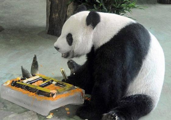Panda Pun Pandai Menipu