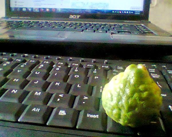 buah jeruk perut