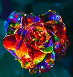 Multi Colour Rose Wallpapers For Mobile Flowershdwallpapers