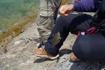 体験/観光 海人体験 魚釣り