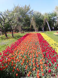 tulipas vermelhas, alaranjadas e amarelas