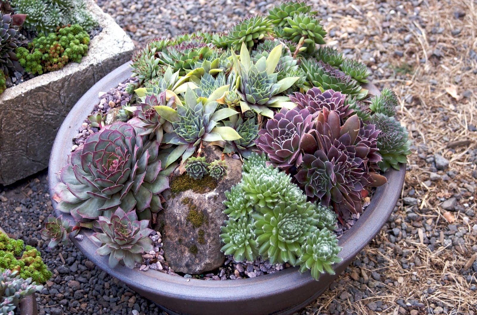Wild Ginger Farm News Blog August 2011